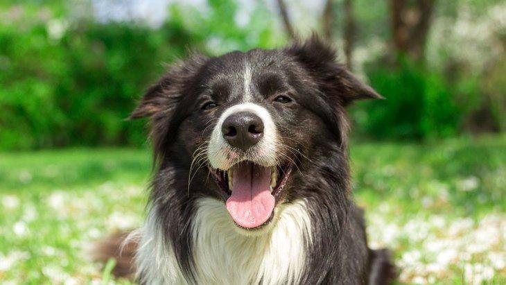 犬にとっての「良い刺激」とは?どんな与え方があるの?