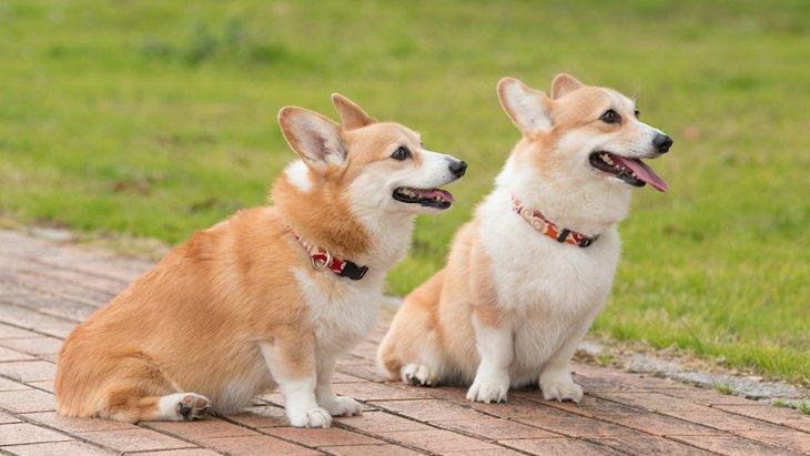『2匹目の犬』をお迎えする時にしてはいけないNG行為5選
