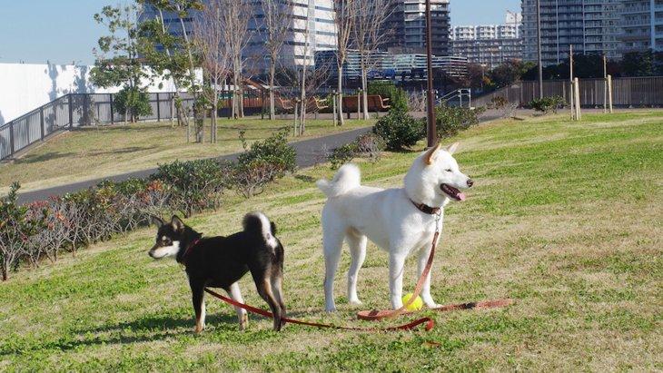 犬と住むのは都会と田舎どっちがいい?それぞれのメリット・デメリット