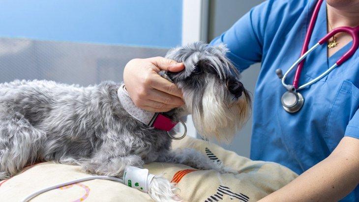 犬が『高血圧』になる原因4選!予防法を知って愛犬の健康管理を