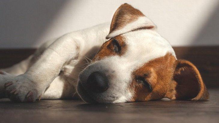 犬が突然意識を失う原因と対処法