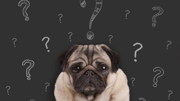 犬は叱られているのを理解してるの?勘違いされてる可能性も?