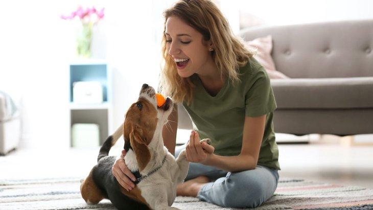 犬が飼い主に喜んでもらうためにやっている4つの行動