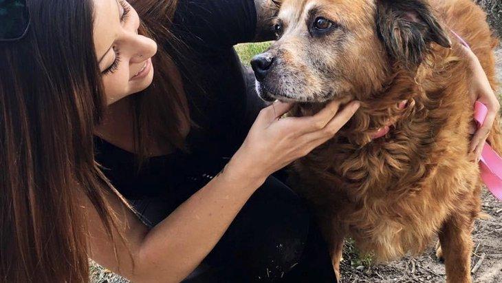 アメリカで開始された保護犬と里親を繋げるマッチングサービス