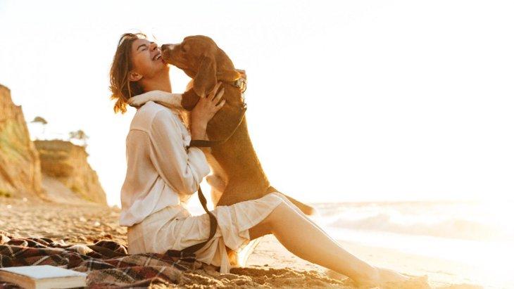 ルンルン♡犬が「ご機嫌」な時によくするしぐさ7選