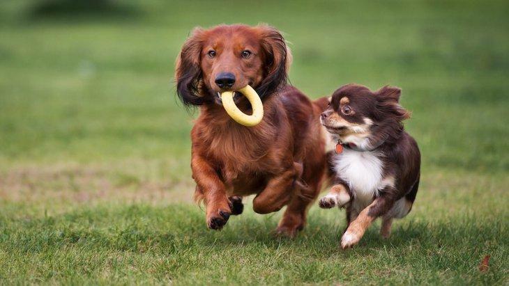 愛犬のために危険性の低いおもちゃを選びたい!気をつける点は何?