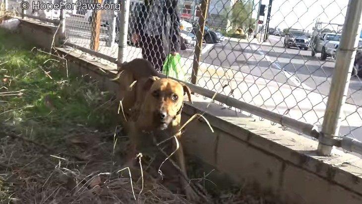 高速道路脇の茂みで孤独に暮らす犬。花子と名付けられた彼女のその後