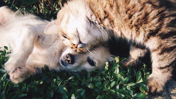 犬の血液は猫にも輸血可能!?