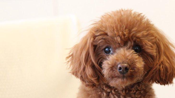 体臭が強い犬と弱い犬の違いとは?それぞれの特徴と消臭対策