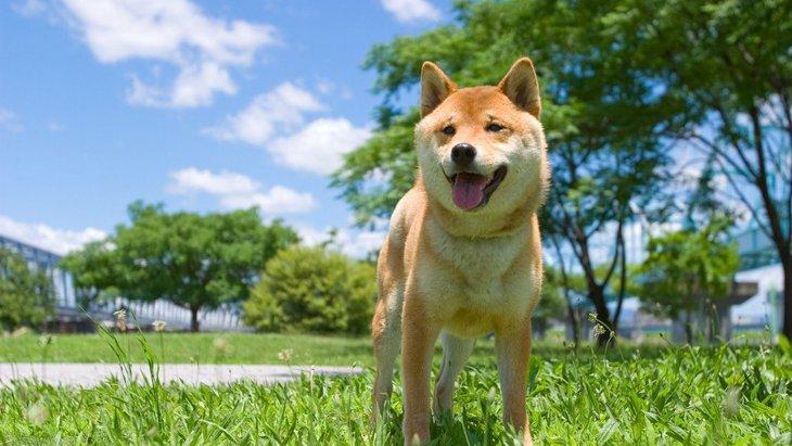 犬が『発情期』の時にする行動6選