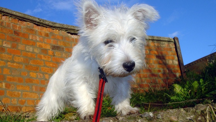 犬が道路の側溝を嫌う理由と危険性