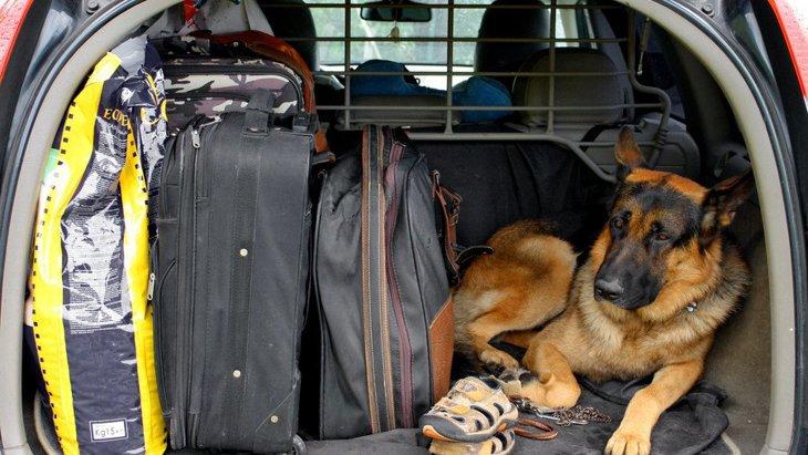 自然災害と犬 一緒に避難する方法や事前の準備について