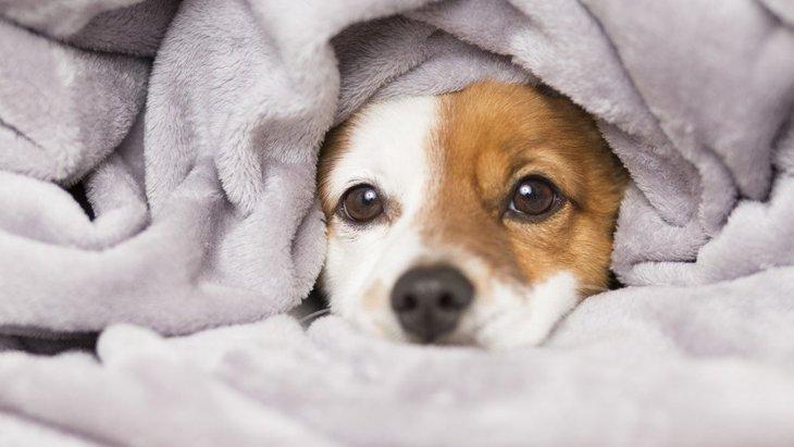 犬が寝てるとき、小刻みに動くのはなぜ?3つの理由