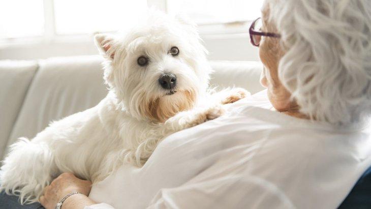 献体された犬の脳がヒトとイヌ両方の老化研究をサポート