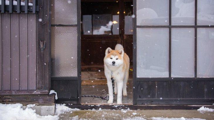 時代遅れ!犬に関する古い考え方4選