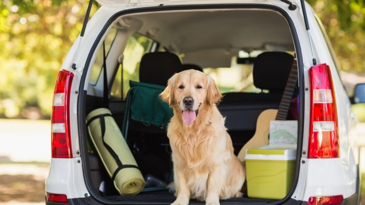 愛犬と車中泊するときに必要なものと注意点