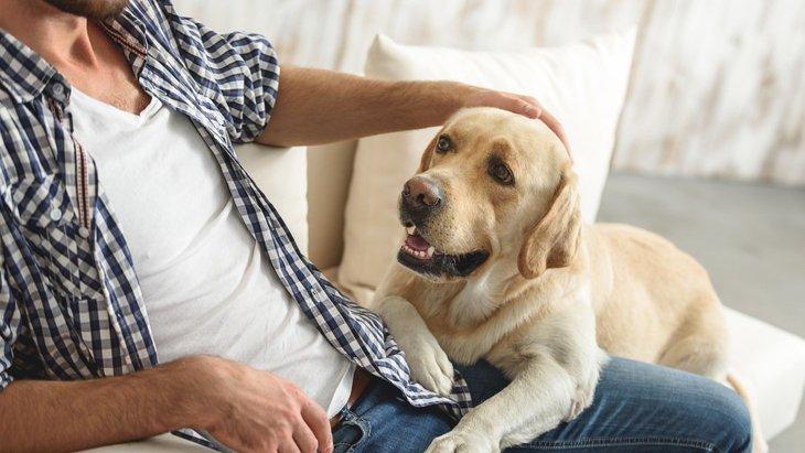 犬が飼い主にタッチしてくる時の5つの心理