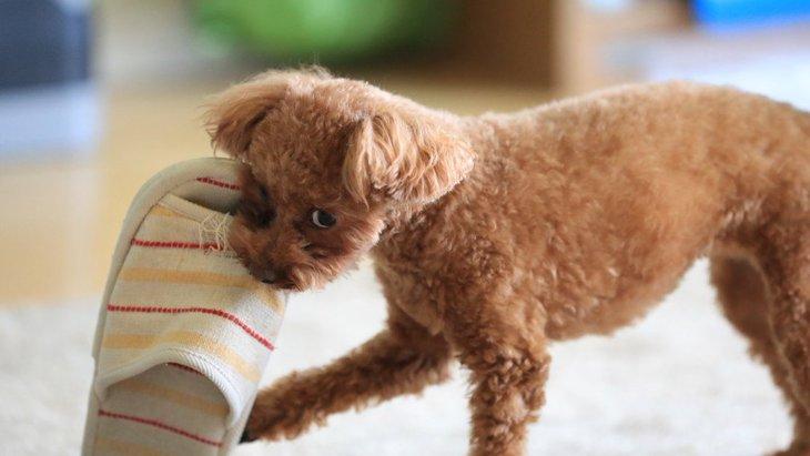 犬が噛んだものを離してくれない!適切な対処法とは?