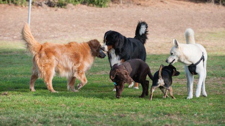 犬からモテる犬ってどんな犬?主な特徴4つ