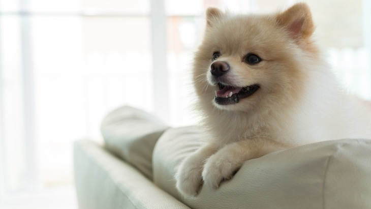 犬の目がキラキラする「星状硝子体症」とは?