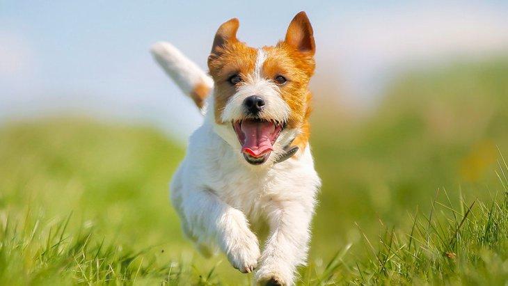 犬の『放っておいていい興奮』と『やめさせるべき興奮』の違いとは?