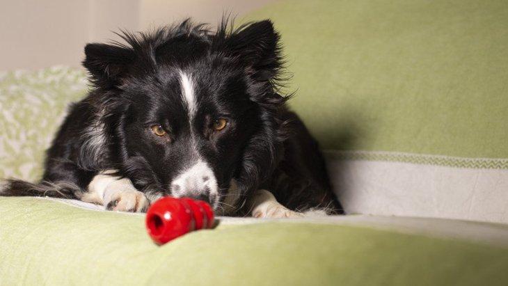犬のおやつの量はどの位が適切?与え過ぎるリスクや正しい活用法について解説