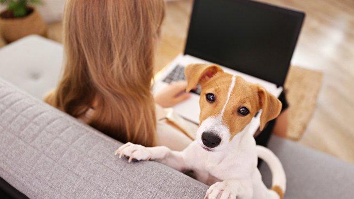 ずっと一緒に愛犬と過ごしたあと、急にお留守番させても問題ない?