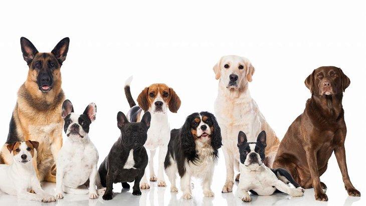 あなたは何犬?『Laylaの12犬占い 』