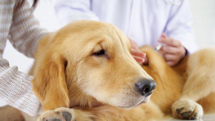 犬からいつもと違う臭いがした時に考えられる原因4つ