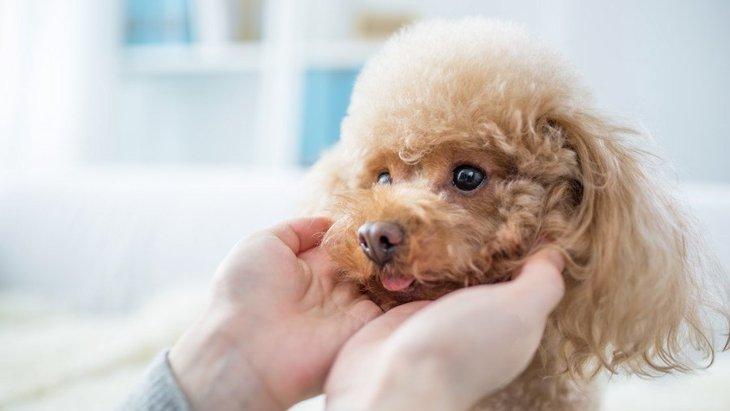 犬が『熱がある時』にする症状3選!病院に連れていくか見分ける方法は?