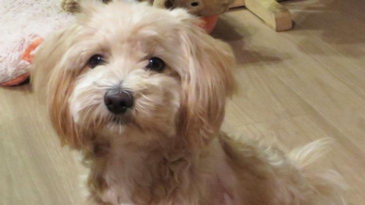 初体験!「愛犬と話せた!?」アニマルコミュニケーターのセッション