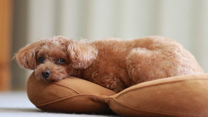 犬が『赤ちゃん返り』をしている時にする仕草や行動4選