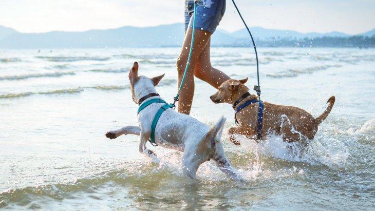 愛犬はどうだった?♡犬が海を初めて見た時によく見せる反応3選