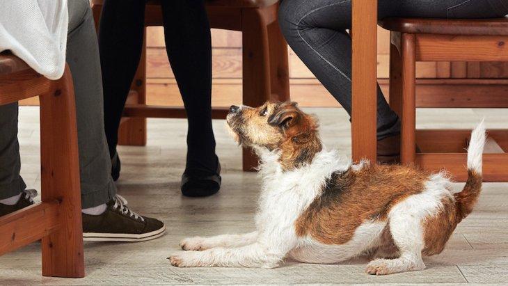 生活に取り入れたい!犬の肥満予防術3選