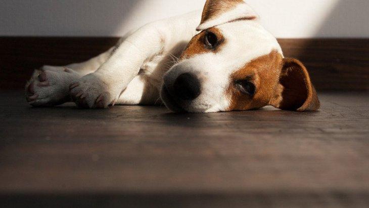 犬が嘔吐や下痢をして震える時の原因と対処法とは