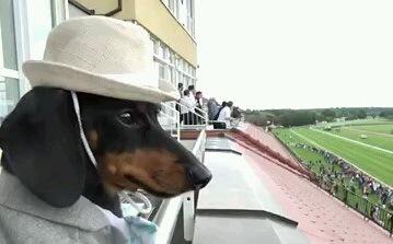 我慢できずに競馬に参加するワンコ