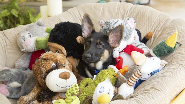 犬が『好きじゃないおもちゃ』によく見せる反応3つ