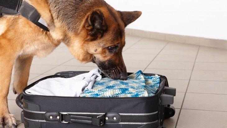 犬の臭いの嗅ぎ方は「間接タイプ」と「直接タイプ」の2種類あるんです!