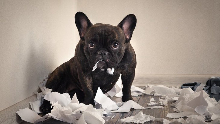 「カワイイ」だけで犬を飼うと後悔する!?犬との生活で大変なこと5つ