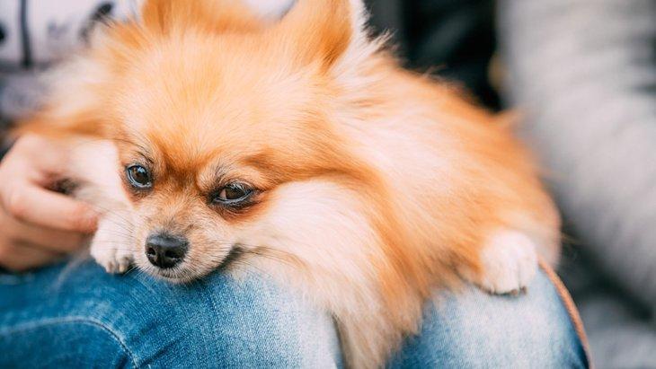 犬が飼い主に甘える4つの理由
