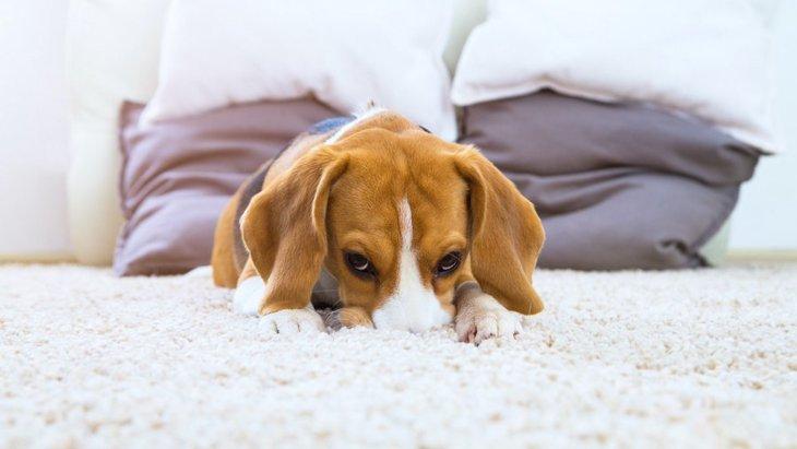 犬が裏切られたと感じる飼い主のNG行為2つ