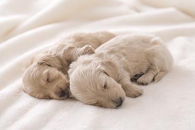 愛犬の妊娠期間の過ごし方や妊娠の兆候から出産まで