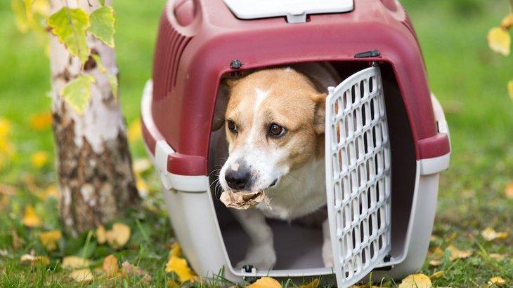 犬にクレートトレーニングをするメリットとやり方