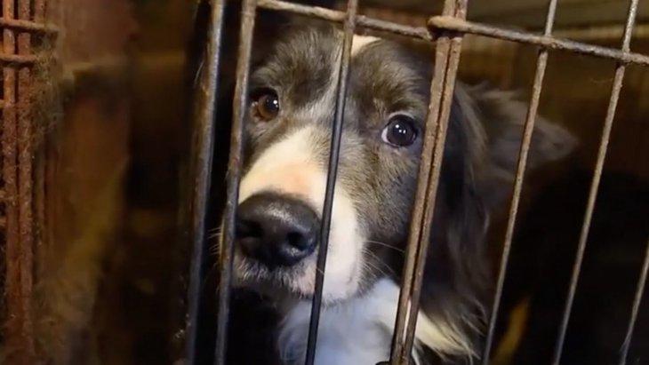 恐怖の館!60頭以上の犬達を救出するため、折れそうな心を奮い立たせる