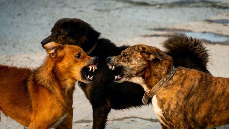 犬は相手を許す?犬同士のケンカの後の和解に関する研究結果