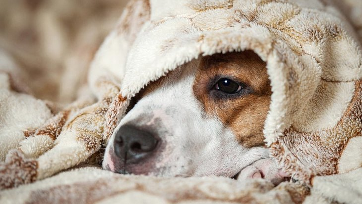 犬の三大死亡原因といわれる病気による「嗅覚の変化」とは