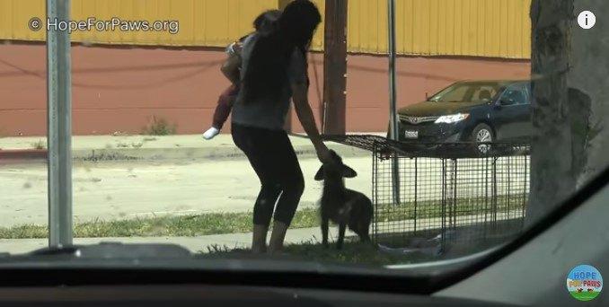 逃げ回った犬は、唯一心を開いていたママの説得でケージに入った