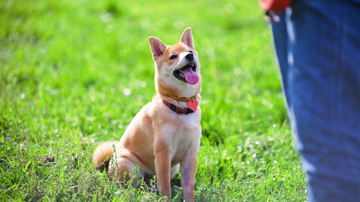 日常生活にも役立つ!警察犬式犬のトレーニング6選