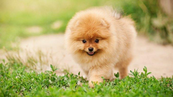 犬の毛の基礎知識!仕組みや役割について