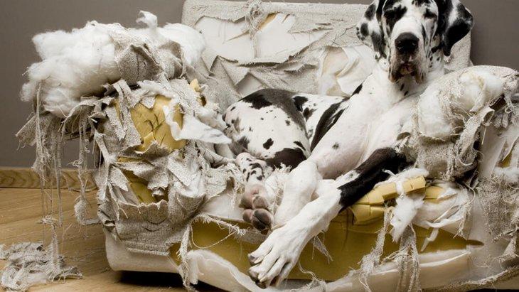 片時も離れられない…実際に経験した愛犬の分離不安による破壊行動